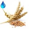 Водорастворимое масло зародышей пшеницы , 100мл