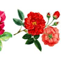 """Водорастворимые картинки """"цветы"""""""