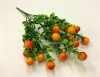 веточка зелени куст самшит и ягодки оранжевые