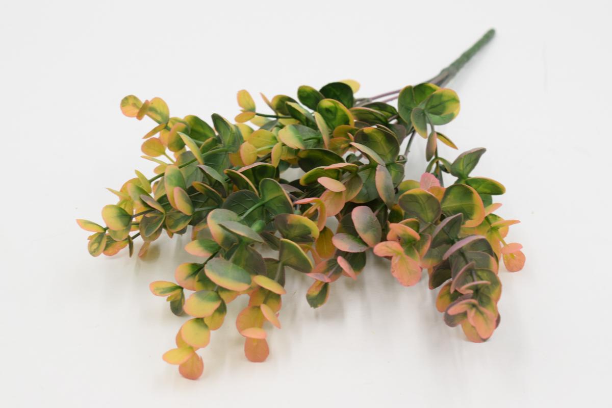 веточка зелени куст эвкалипт, красный
