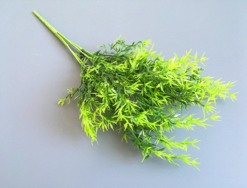 Веточка зелени Аспарагус колючка