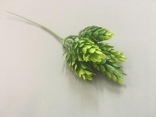 Ветка хмели зеленая