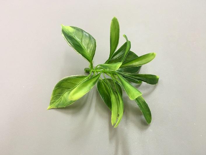 Листья самшит, 6 шт