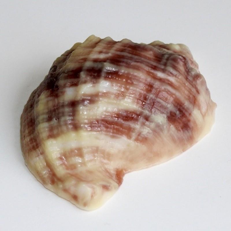 Пластиковая форма Ракушка рапан