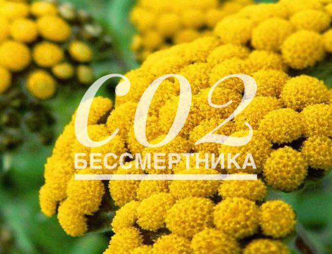 СО2 экстрат бессмертника, 50г