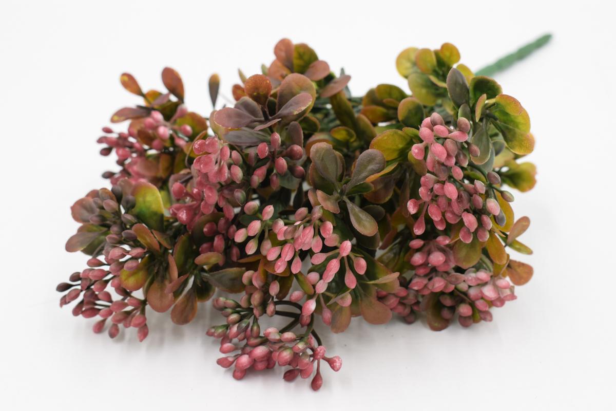 Куст карриса, бордовые цветы