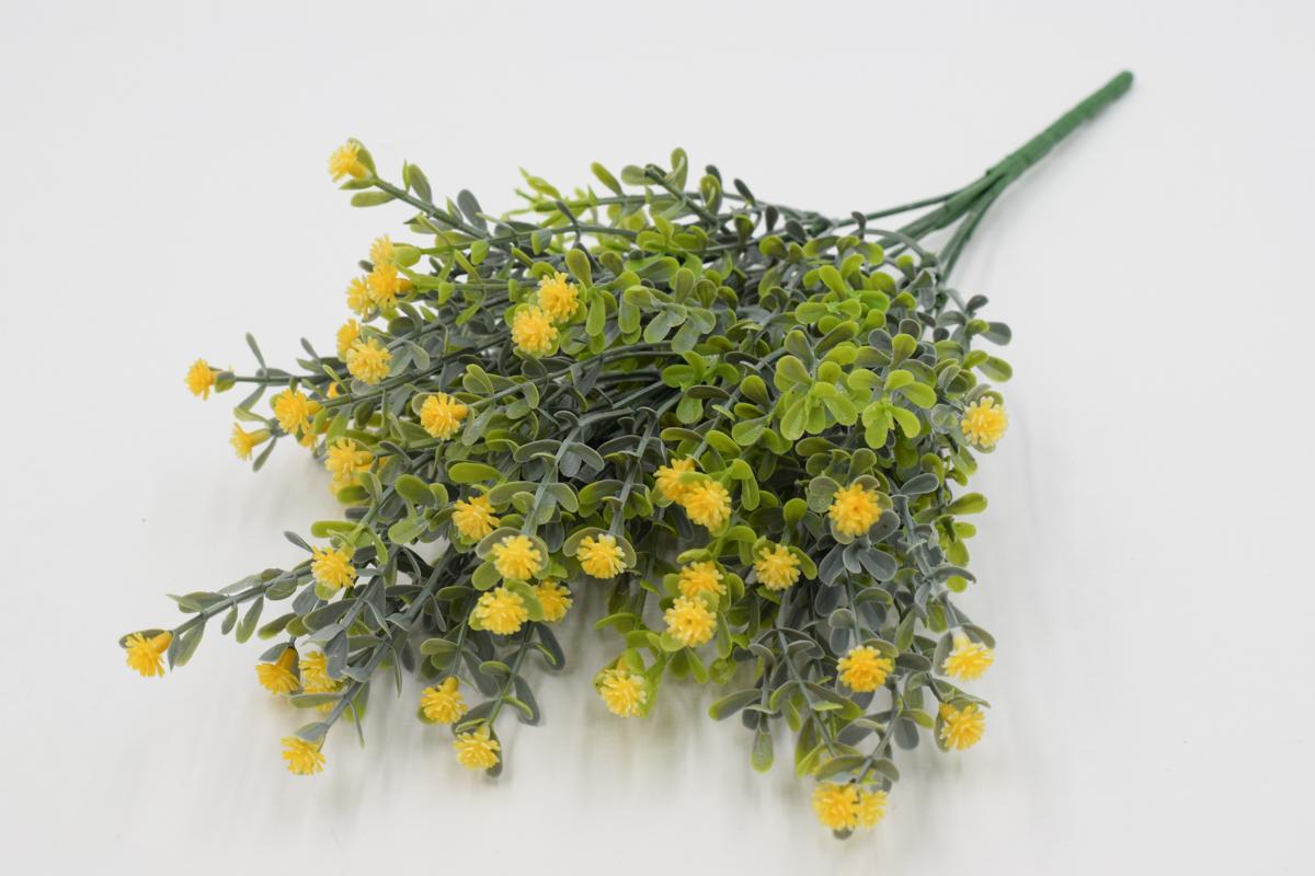 Самшит цветущий желтый