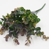 веточка зелени эвкалипт, сиреневый