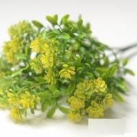 веточка зелени, цветы желтые