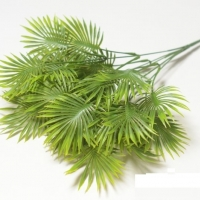 Букет пальмы зеленый