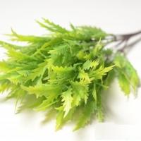веточка зелени лист колючий