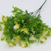 Веточка зелени каланхоэ, цветы желтые