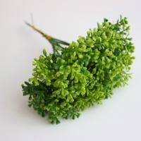 веточка зелени, срез паунок