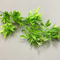 Ветка зелени кустики