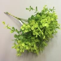 веточка зелени, срез самшит