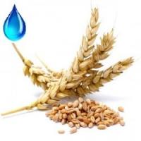 Водорастворимое масло зародышей пшеницы , 50мл