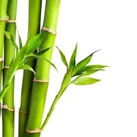 Отдушка Бамбуковое молочко. 10г