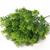 Букет брусничника зеленый