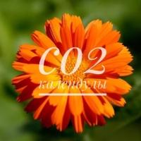 СО2 экстрат календулы, 10г