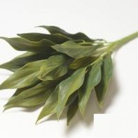 Букет лавр зеленый