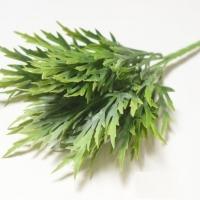 Ветка зелени платицериум зеленый