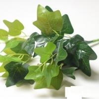 Букет плющ зеленый